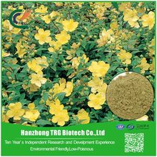 Professional liver pain medicine saint johns wort extract with low price
