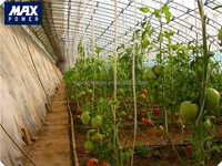 best seeling hydroponic systems solar greenhouse