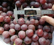 2015 high quality bulk red globe grapes fresh grapes price for sale