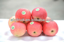 Factory directly supply fuji apple