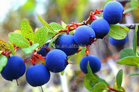 healthcare bilberry extract anthocyanidin