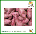 Fresh Sweet potato vegetable on sale