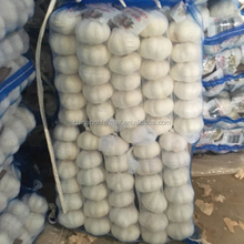 Fresh Pure White Garlic With Best Quality And Good Price For Exporter