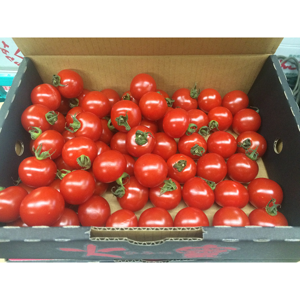 Japan delicious fresh tomato export at good price