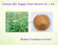 100% natural plant extract Bidens frondosa extract powder