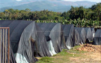 Insect net shading net house for anti insect or shading purpose
