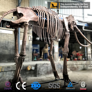 MY Dino-DSA451 Life Size Real Size Mammoth Skeleton