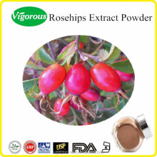 natural 10:1 rosehip extract powder /rosa canina fruit