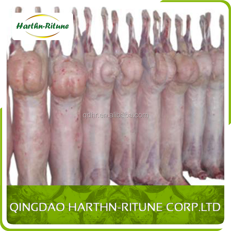 frozen whole lamb carcass meat