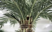 High simulation plastic frond factory direct fake leaf hot sale artificial palm tree leaves