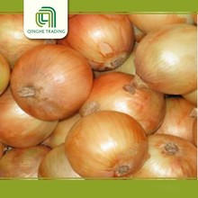 yellow fresh onion in China with best price