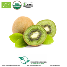 High quality dried organic kiwi fruit slice / powder