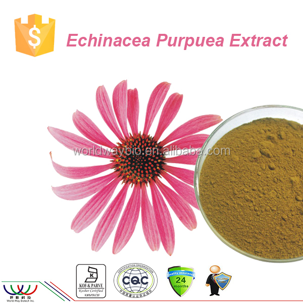 Natural immunity enhancer cGMP FDA Kosher HACCP 4% chicoric acid echinacea purpurea extract in bulk echinacea extract