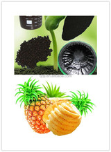 Best quality and price fertilizer for pineapple