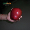 Fresh Red Delicious Apple Products