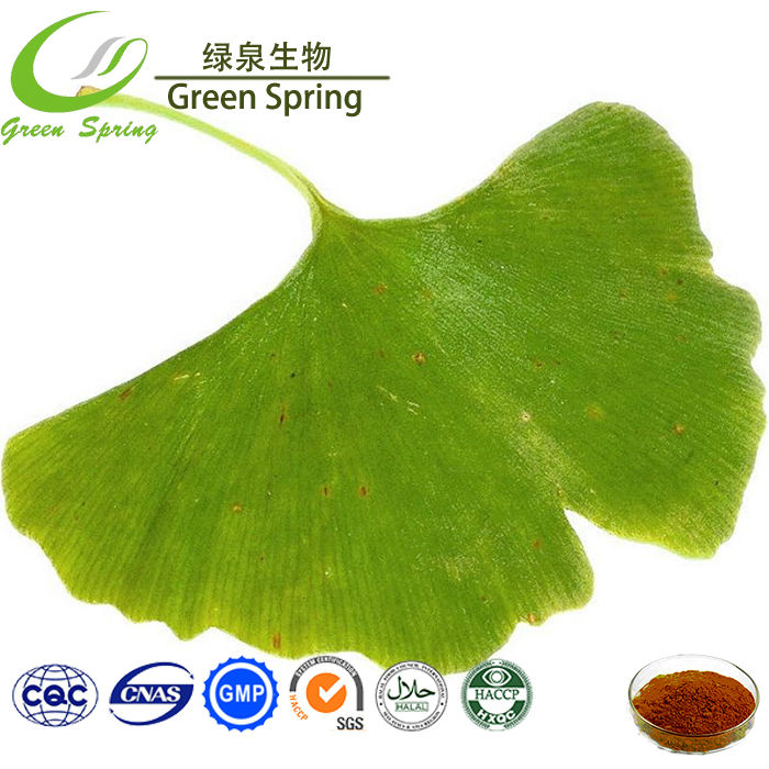 Anti cancer Ginkgo biloba extract powder, Flavone 24%, Lactone 6%, powder