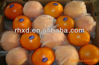citrus fruit factory from China supply you navel orange, baby orange, pokan, lemon and pomelo