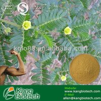 An Aphrodisiac for Men Saponin Tribulus Terrestris extract CAS NO. 486-66-8