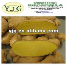 yjg ginger buyer