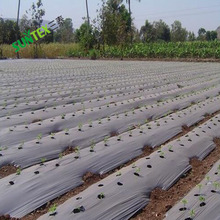 greenhouse strawberry Silver And Black plastic mulch film punch hole for Agriculture