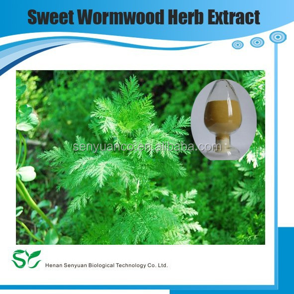 Factory Supply Artemisia annuaL. Sweet Wormwood Herb extract
