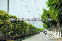 china solar street lamp high illumination for modern lighting