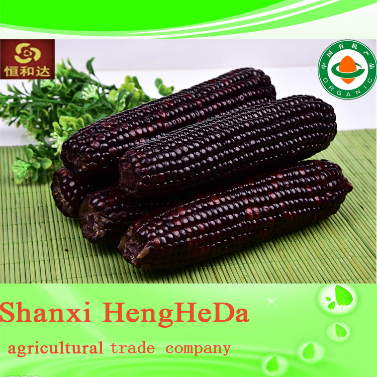 products china yellow maize