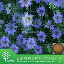 High quality nigella sativa black seed extract