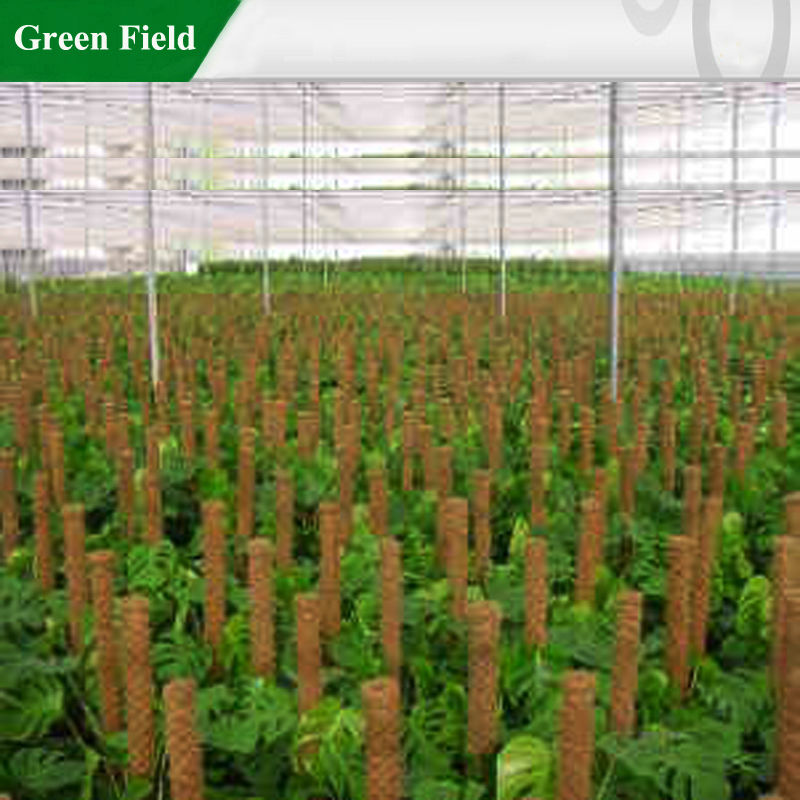 Green Field Garden Plants Grow Sticks