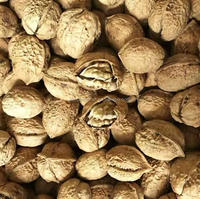Best Price Oganic Walnuts with Thin Shell Or Kernel without Shell Price China