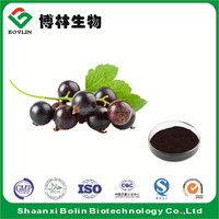 High Quality Natural Black Currant Seed Extract Powder in bulk