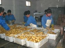 New turmeric factory exporter with low price
