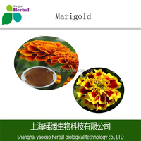 Wholesaler sell marigold powder with high best in bulk