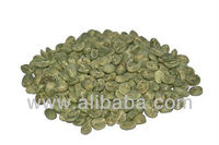 Arabica coffee green beans from Yunnan, China