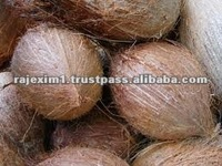 Indian coconut Fruit