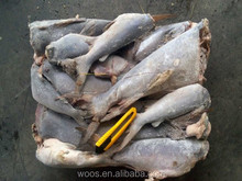 IQF wholesale salable frozen sea catfish from china