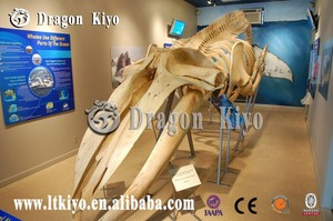 2015 Dinosaur skeleton fossils suppliers whale for sale out in door