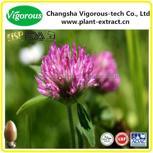 Free sample red clover plant powder extract / p.e.