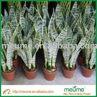 Home Decor Plants Indoor Plant Artificial Golden Sansevieria