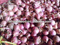 lowest price red onions price