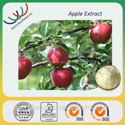 100% Natural and pure Apple extract with 90% 95% 98% phlorizin by HPLC