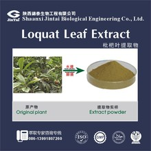 Natural Cosmetic Ingredient Alpha-Arbutin Loquat Leaf Extract