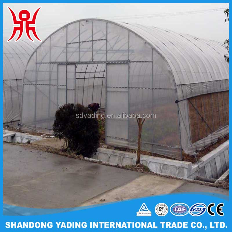 Single span mushroom greenhouse