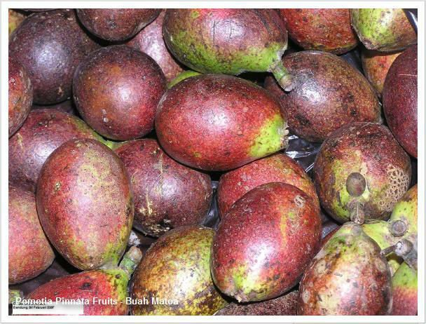 MATOA FRUIT/EXOTIC FRUIT