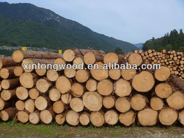Hinoki logs/Japanese Cypress logs