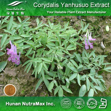 High quality and low price Corydalis Extract, Corydalis Extract Powder, Corydalis Powder