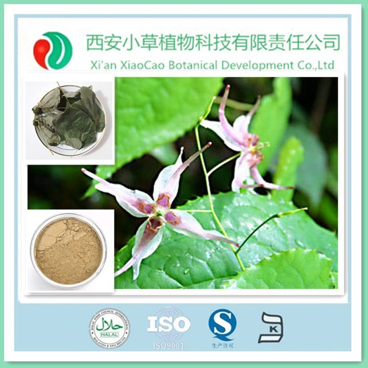 Manufacturer Supply 100% Pure Yellow Brown Epimedium P.E with Nourishing Aphrodisiac Effect