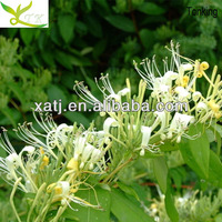 Top quality natural plant extract Chlorogenic acid Honeysuckle Extract