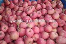 Hot-sell Bulk Fresh Fuji Apple