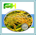 100% Natural Ferulic Acid 98%-99% Rice Bran Extract